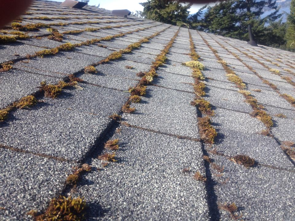roof demossing victoria bc